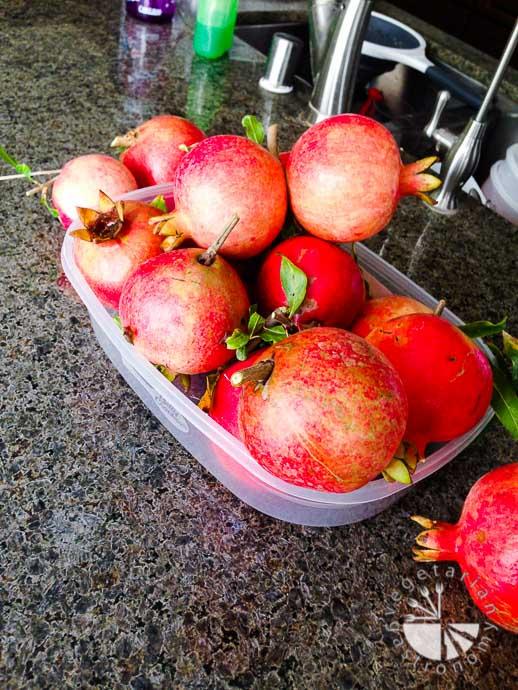 pomegranates-2