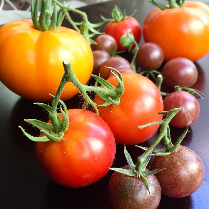 A close up of ripe tomatoes used to make a tuscan panzanella salad