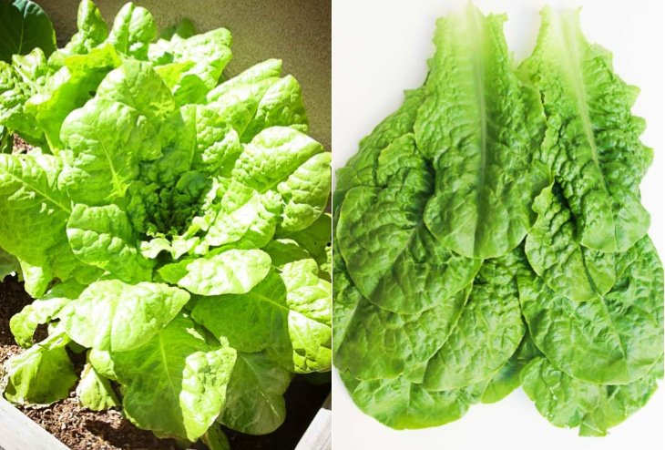 A collage image of romaine lettuce used to make lettuce cups